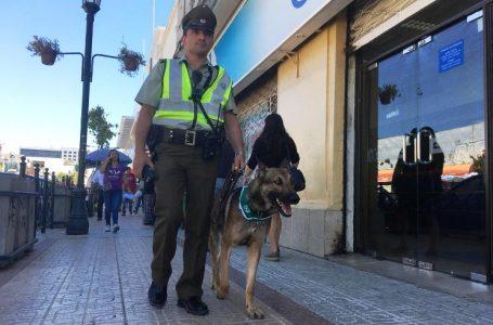 """""""Emir del Emblema Verde"""" llegó a Talca para proteger a los vecinos"""