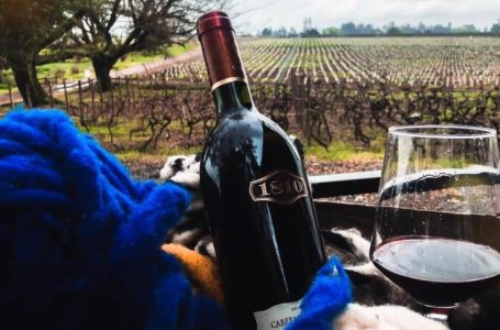 "Viña Casa Donoso invita a su ""WineFest Casa Donoso 2019"""