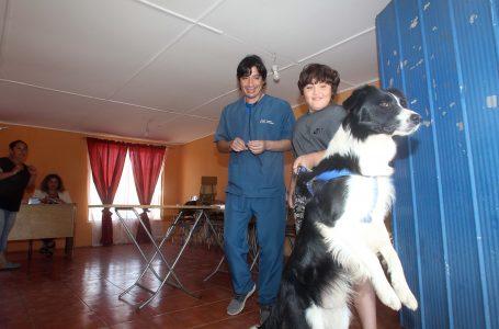 Más de 200 mascotas fueron atendidas en operativo de la veterinaria popular de Rauco
