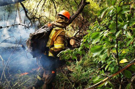 """Cerca de 6 mil hectáreas ya han sido afectadas por incendio """"Agua Fría"""""""