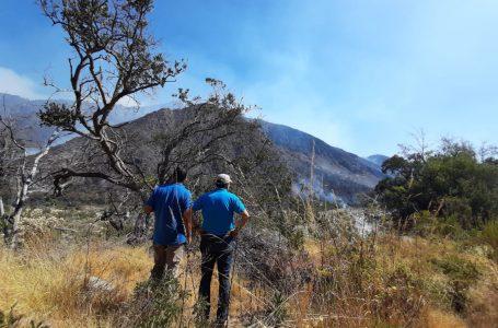 Continúan los trabajos para evitar que incendio forestal afecte a territorio de la precordillera de Curicó
