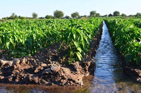 ¿Sabías que las aguas de riego y para el consumo humano pueden contener metales pesados?