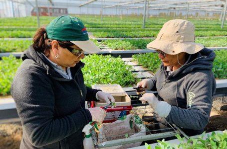 Corma impulsa proyecto para mayor participación femenina en sector forestal