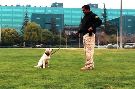 Mascota Protegida: Lanzan cápsulas online para enseñar comandos de adiestramiento canino básico